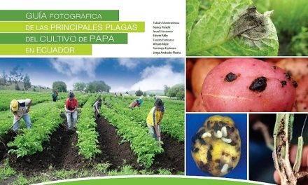 Identificación de plagas, enfermedades y fisiopatías en patatas