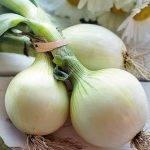 Cebollas y rábanos de Intersemillas