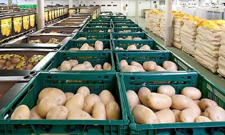 Asociaciones y retos en la industria española de la patata