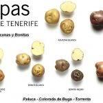Investigación sobre la cebolla y la patata en Canarias