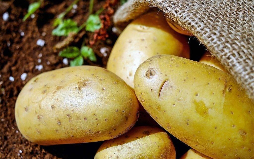 En Estados Unidos aprueban una patata modificada genéticamente que no se magulla