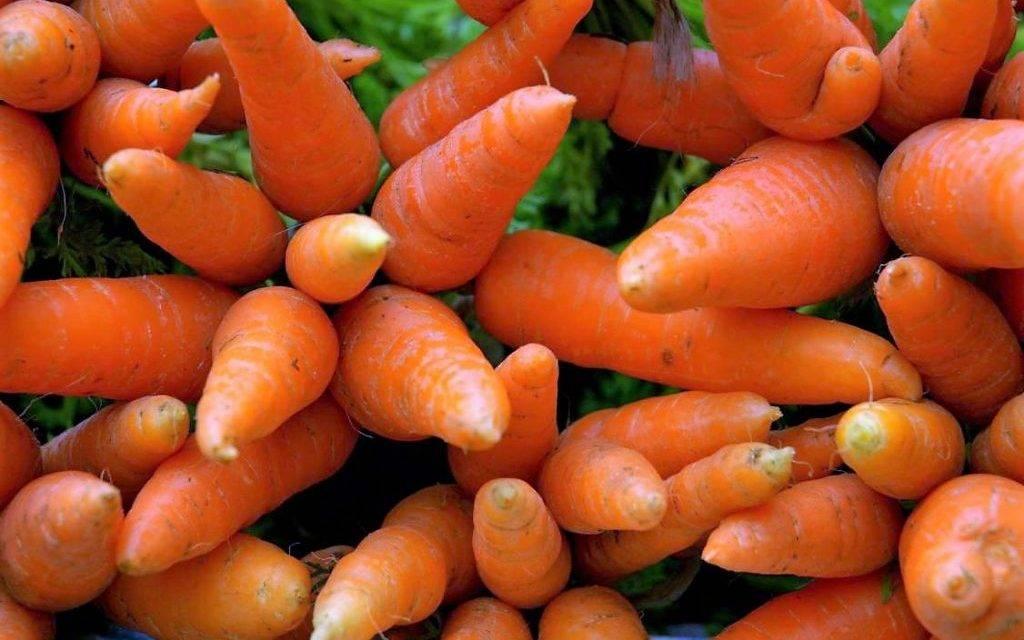 Controlar el amarillamiento de las zanahorias