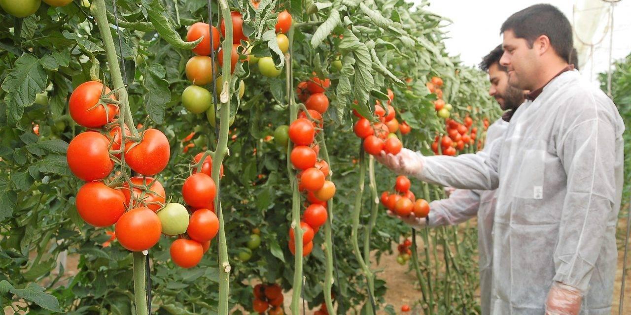 Control de calidad en hortalizas