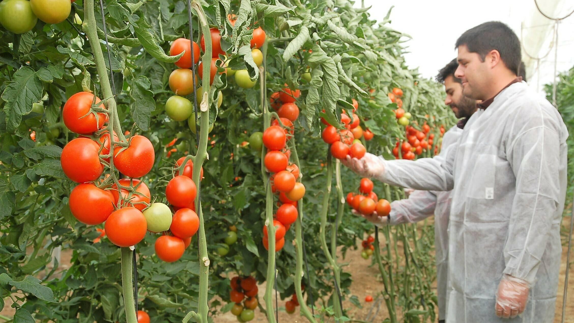 composicion quimica de los alimentos hortalizas