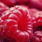 Buenos resultados sanitarios y sensoriales en frambuesa