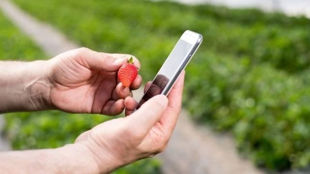 Alta tecnología aplicada a los cultivos, la alemana Bosch recoge los datos