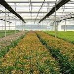 Intensificar el cultivo en invernaderos