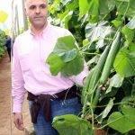 Variedades de Fitó en berenjena, tomate y pepino para los invernaderos de Almería: Amalia, Nerea, Ateneo y Drago