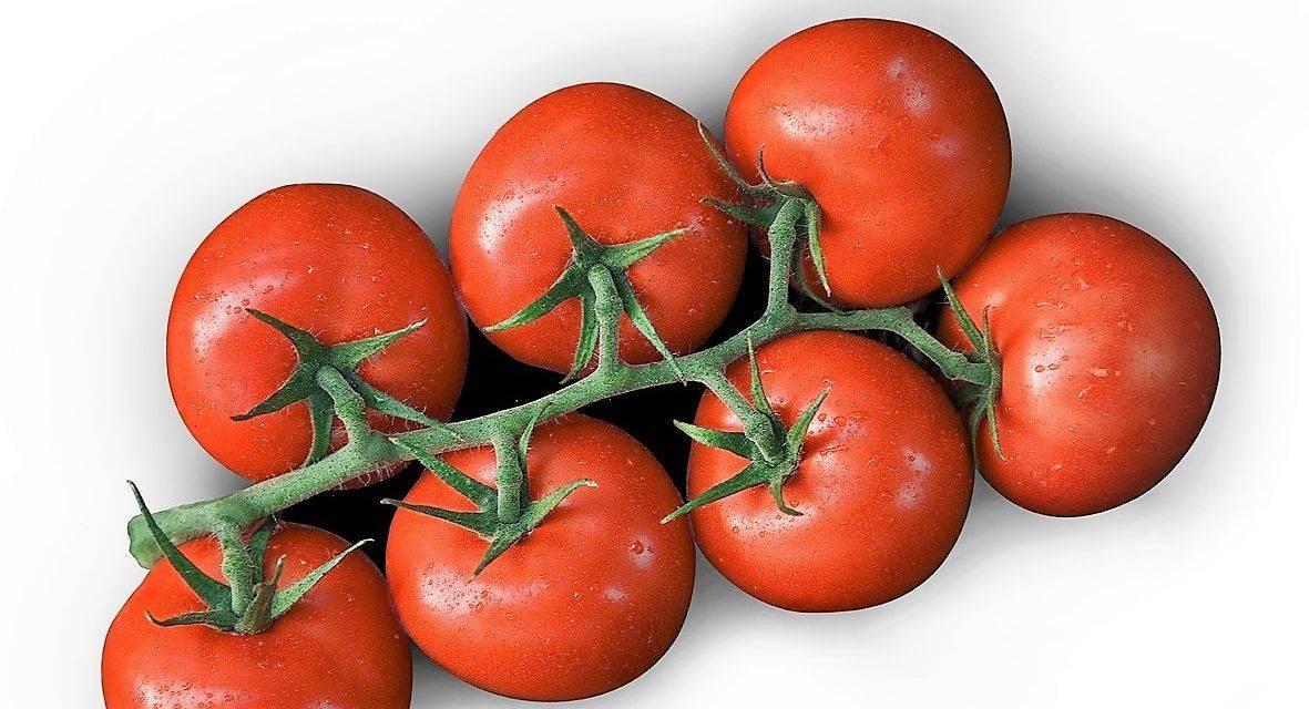 Evolución de precios de tomate en Alemania