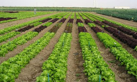 Las hortalizas cultivadas al aire libre en condiciones de climas suaves