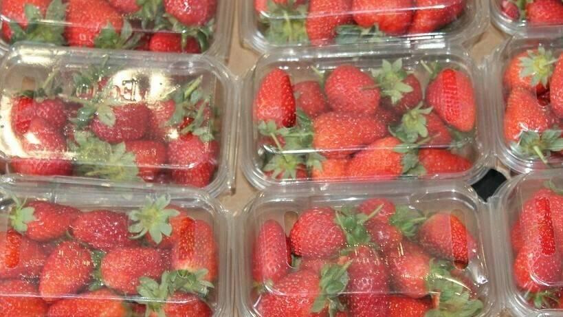 Envases dinámicos con atmósferas activas, la solución a la conservación de los frutos rojos