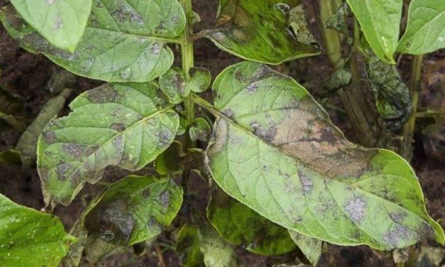 En el camino para obtener nuevos productos fitosanitarios de origen biológico que protejan a las plantas