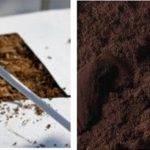 Nuevas técnicas de cultivo para frutos rojos que aumentan la producción