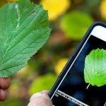 Plagapp, la aplicación que detecta las plagas en cultivos