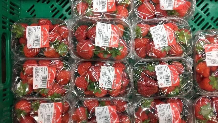 Los plásticos microperforados permiten 8 a 10 días de conservación en fresa