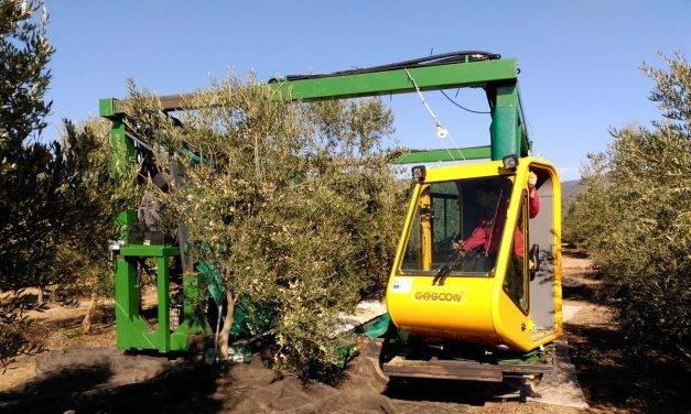 INNOLIVAR invertirá en proyectos de innovación para el olivar