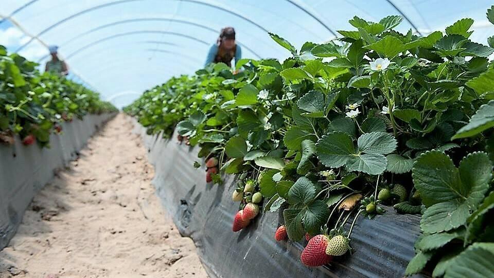 Plástico agrícola sostenible y económico