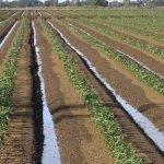 El lixiviado de nitratos y la biodesinfección del suelo