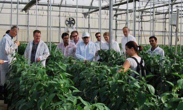 Aumentar el CO2 en los invernaderos de climas suaves