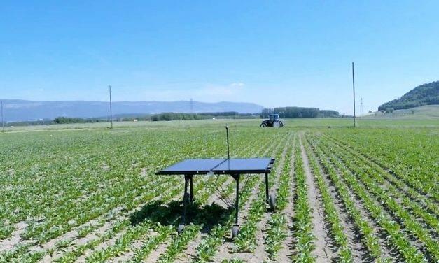 El control de malezas en hortalizas está en pleno cambio