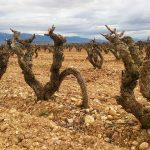 Retrato del  el impacto del cambio climático en la agricultura