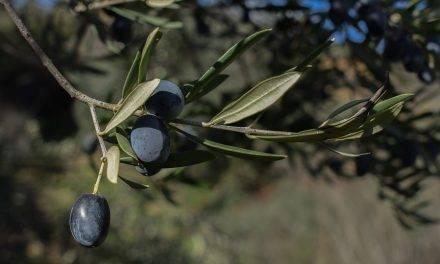Jornada técnica sobre innovaciones técnicas en la poda del olivo