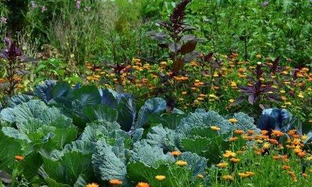 Recursos biológicos en la producción hortícola