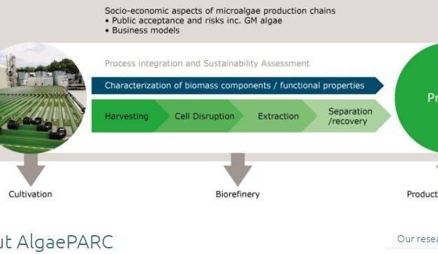 Las algas pueden proporcionar un gran avance para los suministros de alimentos y energía
