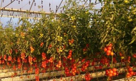 Tecnova acreditado para realizar ensayos EOR de productos fitosanitarios