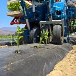 Mulching, when and why it can be used