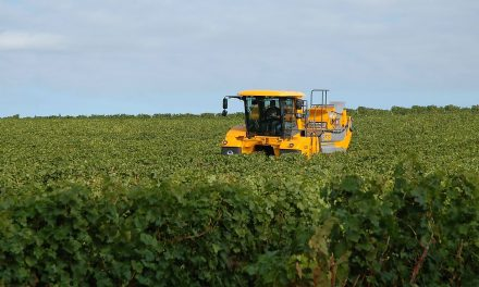 Recolección con máquinas cabalgantes de fruta dulce destinada a industria