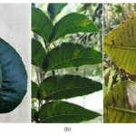 Pigments, proteins, amino acids and nonstructural carbohydrates may be used as indicators related to Zn nutritional status on pecan trees