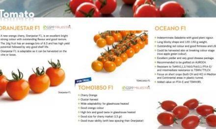 Nuevos tomates cherry y portainjerto de melón