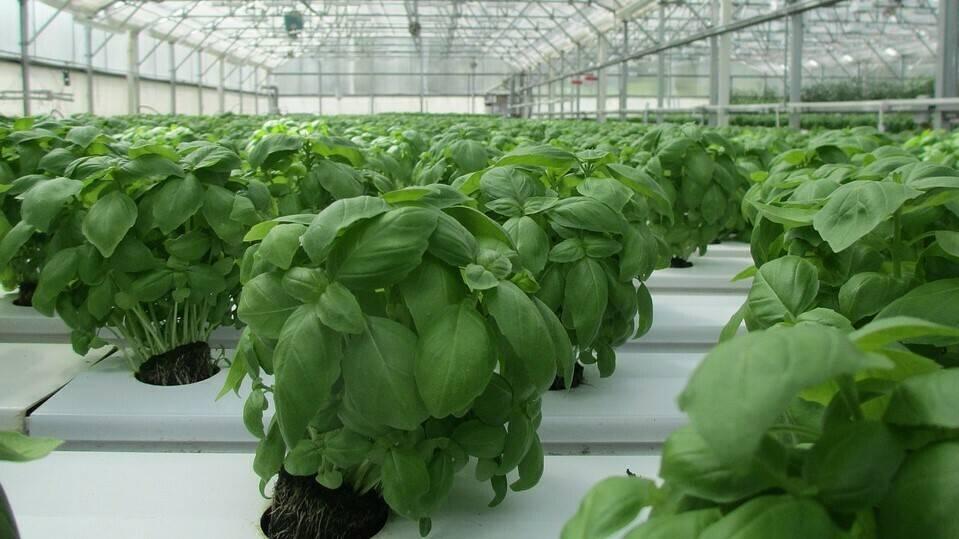 BioPod, greenhouse innovation