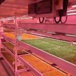 El espectro LED AP67, potenciador de la fotosíntesis, para el cultivo hortícola bajo cámara