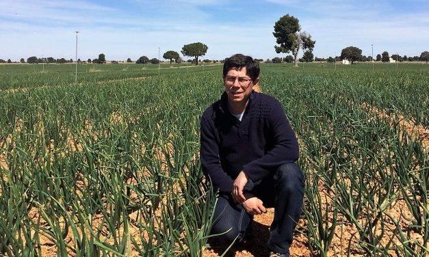 La cebolla hoy en día es un cultivo muy tecnificado y mecanizado