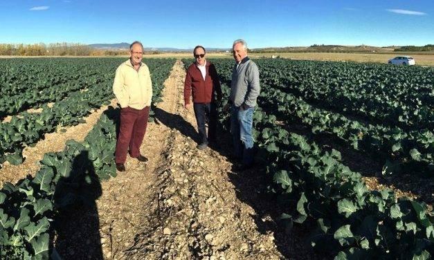 FMC Agricultural Solutions obtiene autorización para sus insecticidas de Cyazypyr®