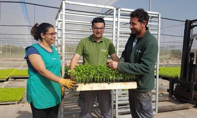 Prácticas CIPFPen el semillero de producción agroecológica