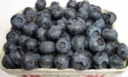 Mejora de la poscosecha en berries