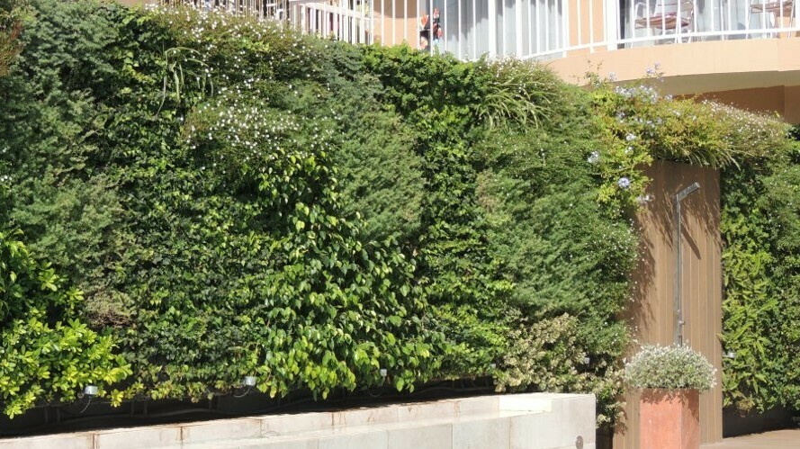 Los  jardines verticales actúan como sistema de enfriamiento pasivo para fachadas aisladas