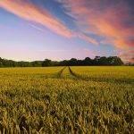 Phytoma y el impacto del cambio climático en la Sanidad Vegetal