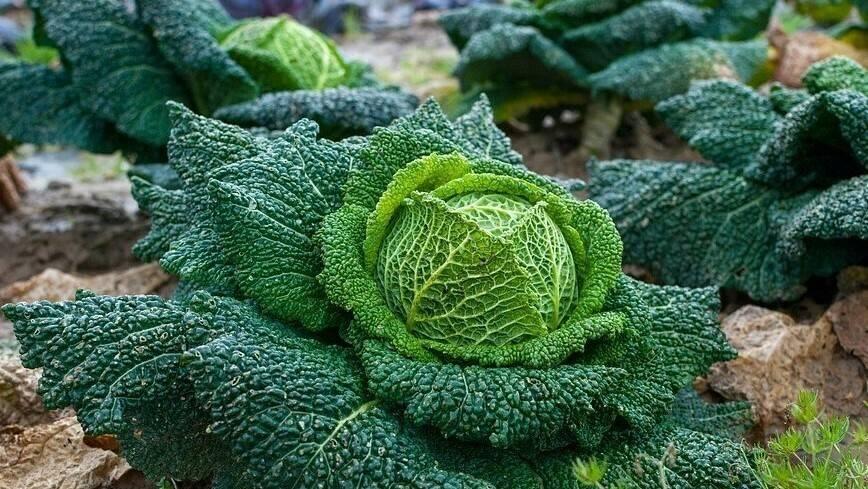 GreenTech Amsterdam 2018: the Organic Farmers Fair in the spotlight