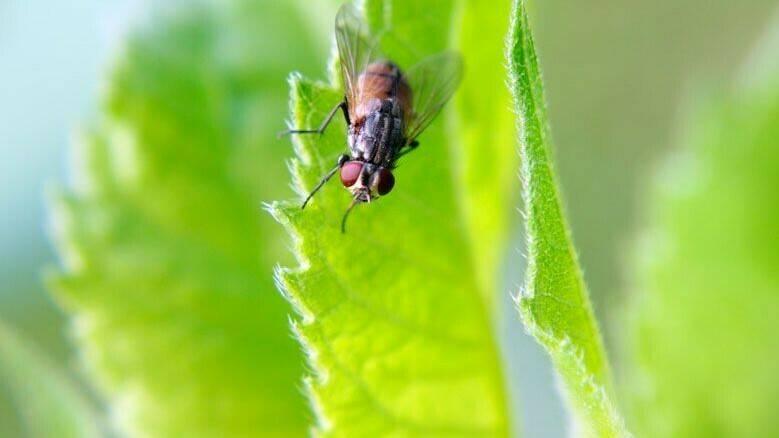 5 preguntas sobre la legislación de productos fertilizantes