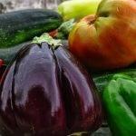 Tratamientos para la conservación prolongada de tomate, pimiento y Berenjena