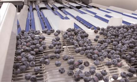 Berry Class, la clasificadora de arándanos más avanzada del mercado
