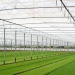 Especialidades de agrotextiles Arrigoni: Protecta®, Prisma® y Biorete® Air Plus