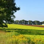 Bayer launches online training in good agricultural practices