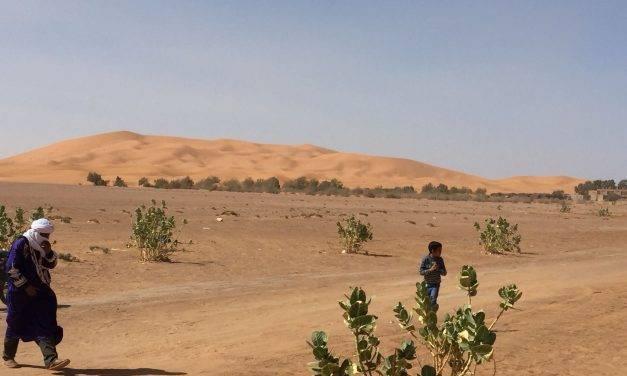 Agricultura sostenible en el desierto