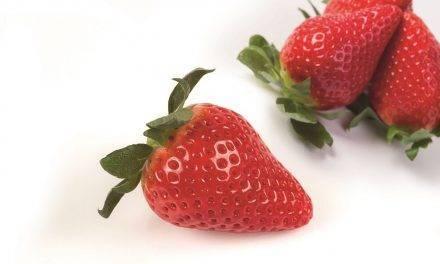 Planasa lanza al mercado su nueva variedad de fresa bajo la marca Savana