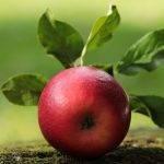 Spotter® WG y Cardinal®, los fungicidas de Tradecorppara frutales de pepita